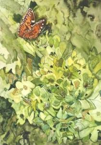 Anne Snowdon – Watercolour on Paper